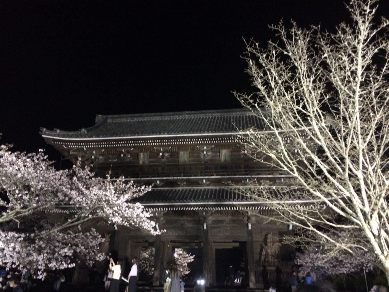 <岩出市>桜のライトアップ